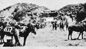 Mules at the foot of Howitzer Gully. Image from 'New Zealanders at Gallipoli' by Major Fred Waite (gutenberg.org)